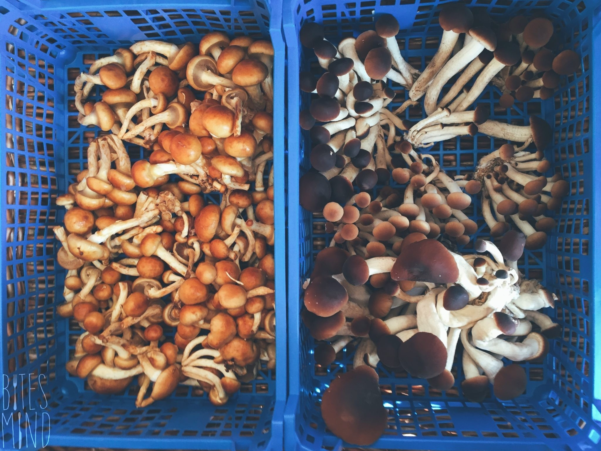 Ökomarkt am Kollwitzplatz - mushrooms